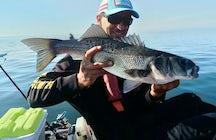 Bretagne Pêche Sportive