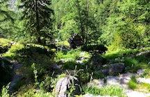Alpine Botanical Garden Juliana, Slovenia