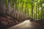 National Park of Foreste Casentinesi