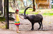 Le cornelle Wildlife park
