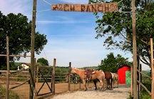 CH ranch maneggio cavalli divertimento