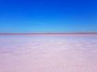 Pink Lake Kobeituz in North Kazakhstan