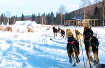 Listvyanka Dog Sledding, Lake Baikal