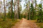 Beaver trail, Lahemaa National Park