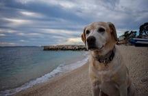 Dog beach Šilo (Croatian: Pseća Plaža Šilo)