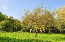 Parco Scout di Cervignano