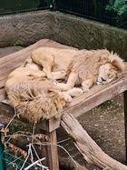 Animal Park Bouillon, Bouillon