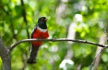 Santa Rosa National Park, Guanacaste, Costa Rica