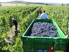 Janus Winery