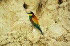 Photo-safaris & birds-watching at Hutovo Blato