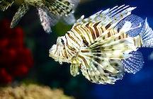 Tropicarium-Oceanarium Budapest