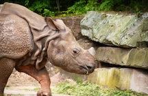 Nuremberg Zoo