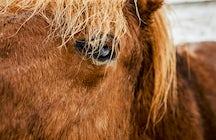 Fakasel - The Icelandic Horse Park