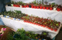 Alasitas miniature market