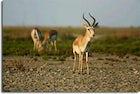 Ag Ghol National Park