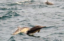 Whale and dolphins watching around Torridon
