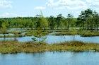 Galkinsky Swamp (Galkinskoye boloto), Galkino