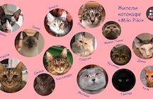 Cat Cafe Miki Piki