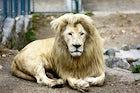 Belgrade Zoo