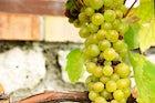 Tokaj wine region