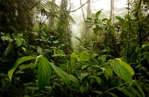 Los Angeles Cloud Forest Reserve, Costa Rica