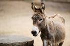 Donkey Trekking Etna