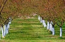 Apricot trail