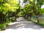 Valea Trandafirilor Park, Chisinau