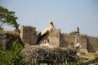 Dünya Mirası Selçuk Efes