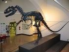 Natural Science Museum - Bergamo