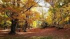 Woods of Sant'Antonio Pescocostanzo