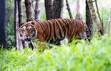 Sundarbans, West Bengal