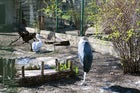 The Zoo of Chisinau