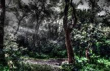 Hoia Baciu Forest near Cluj-Napoca