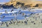Paracas National Reserve, Paracas