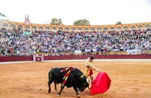 Running of the Bulls (Fiesta de San Fermín)