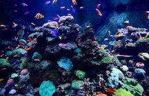 Singapore S.E.A. Aquarium
