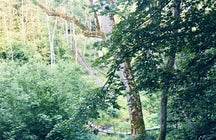 Jurkiškis Stream Valley, Dubingiai