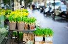 Marché aux fleurs - Reine Elizabeth II, Paris