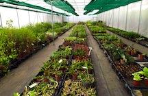 The Ark Herb Farm, Costa Rica