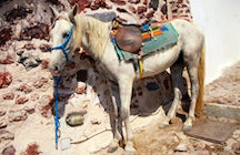 Donkey ride and traditional weddings