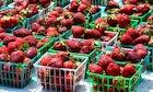 Strawberry Festival, Baikalsk