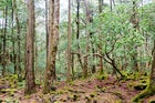 Aokigahara Forest, Yamanashi