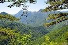 Perućica - European last jungle