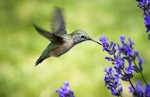 The Hummingbird Refuge, Samaipata