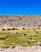Reserva Nacional Las Vicuñas