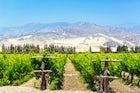 Pisco's vineyeards
