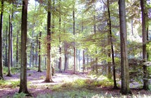 La Forêt de Soignes