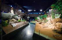 Natural History Museum of Geneva
