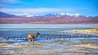 Eduardo Avaroa Andean Fauna National Reserve